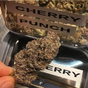 Cherry Punch (Hybrid)