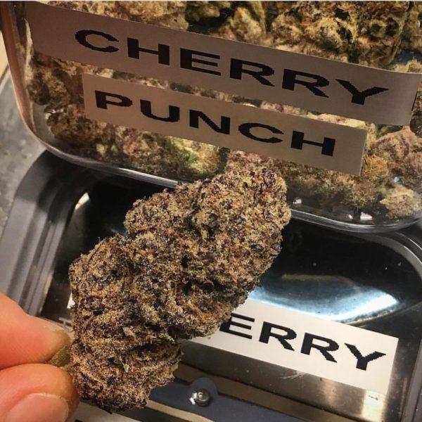 Cherry punch strain