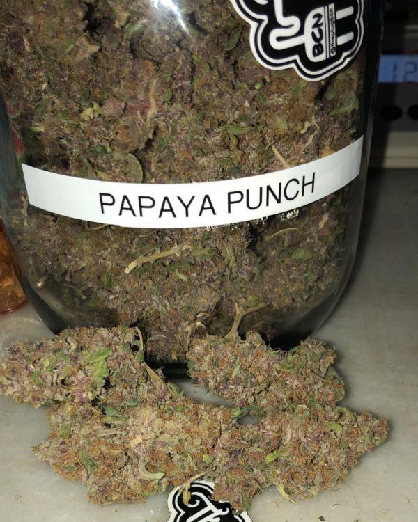 Papaya Punch strain