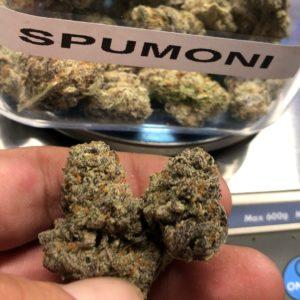 spumoni strain